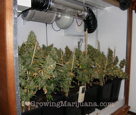 small grow room how to build an indoor marijuana grow room