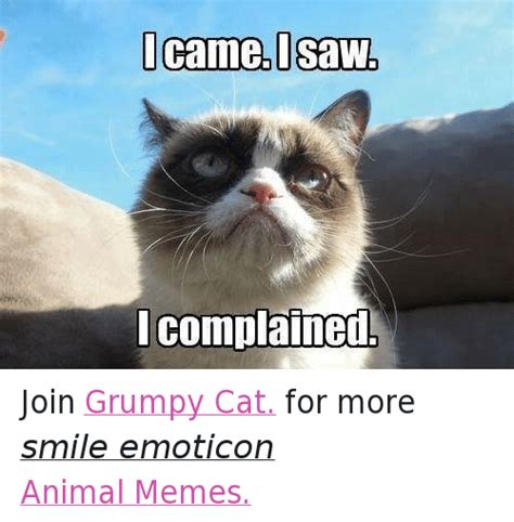 grumpy cat joins cats on 25 best memes about animals anime cats grumpy cat