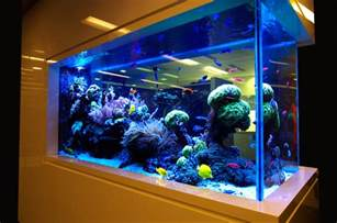 Aquarium Interior Design Modern Aquarium Designs For Home That Looks Beautiful