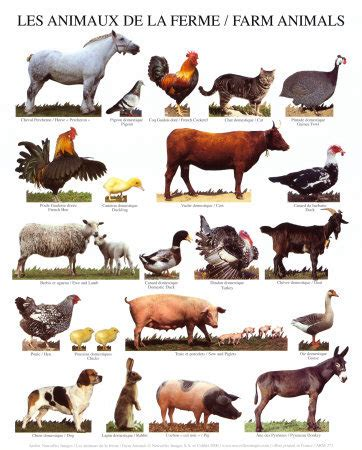 printable animal figures animals figures of speech plus common vocabulary mr