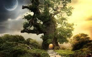 define tree tree wallpapers best wallpapers
