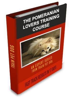 do pomeranians bark a lot pomeranian learn all about pomeranians taking care of them