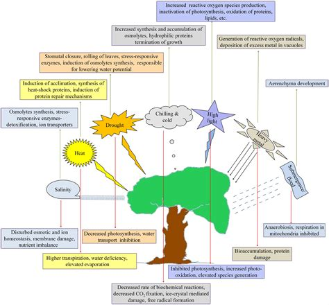 concept review section the nature of light frontiers abiotic stress responses and microbe mediated