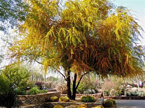 alberi da giardino piccoli alberi crescita veloce una selezione delle specie pi 249