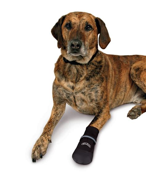 comfort dogs walker comfort care boots for dogs protective boots