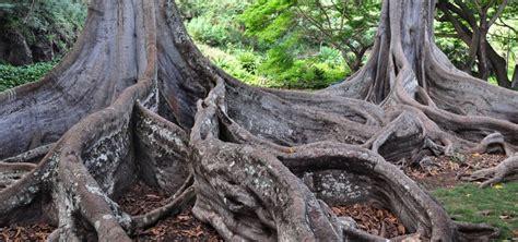 National Tropical Botanical Gardens Kauai National Tropical Botanical Garden Kauai Hawaii