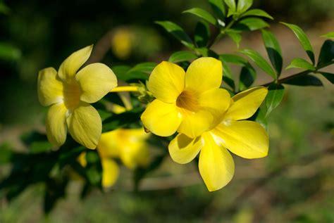 Aglaonema mes conseils fleurs amp plantes items fan de fleurs