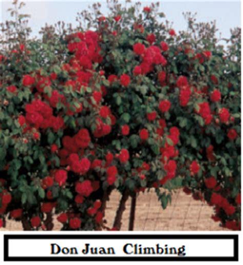 Home Garden Design Tips Magnolia Landscape Gt Reference Gt Roses