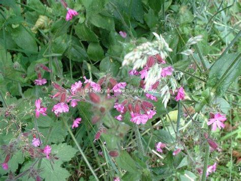 bloemen herkennen aan blad wilde planten onkruiden on gewenste en of on gewilde
