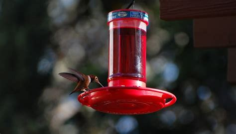top 8 best hummingbird feeders to easily attract
