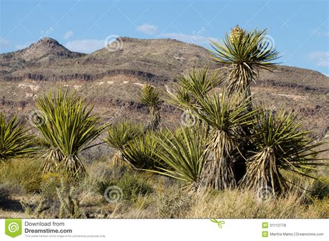 National Landscape Definition Landscape Preservation Definition 28 Images Ten Frank