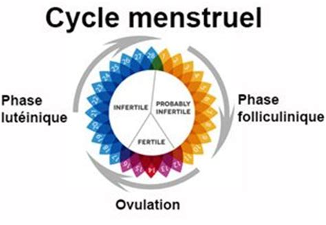 Calendrier Pour Calculer Ses Regles Comment Comprendre Cycle Menstruel