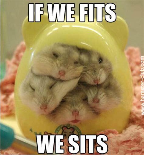 Hamster Meme - funny hamster memes hamster pinterest funny hamsters