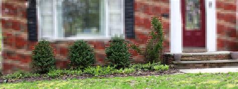 Yard House Cleveland by Stranded In Cleveland Front Yard Transformation Our