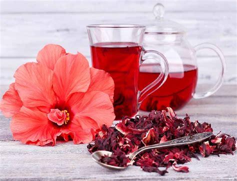 Pupuk Untuk Bunga Sepatu 10 manfaat teh kembang sepatu dan cara membuatnya