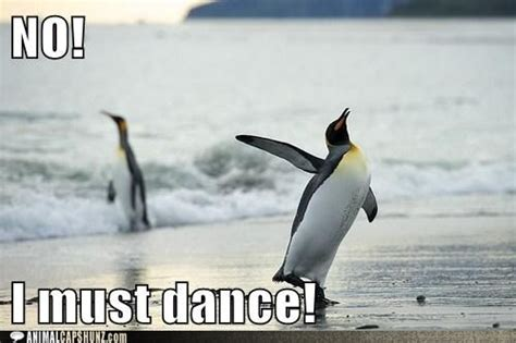 Funny Penguin Memes - funny animal captions no i must dance penguin love