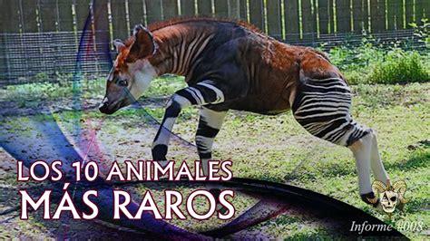 imagenes de animales extraños reales 161 incre 237 ble los 10 animales reales m 225 s raros del mundo