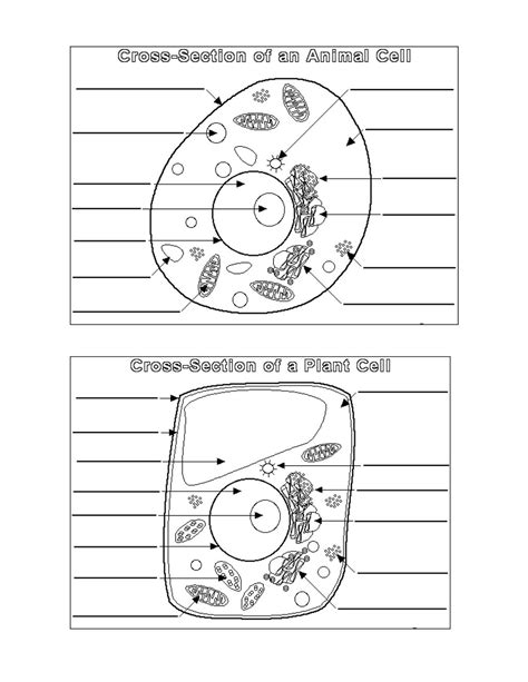 Animal Cell Worksheet animal and plant cell diagrams printable diagram