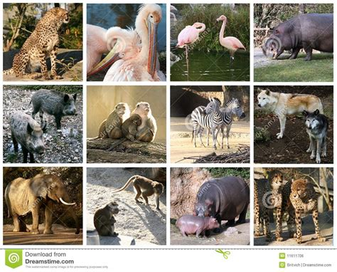 imagenes de animales del zoologico zoo collage stock photo image of collage hippopotamus