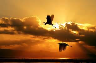 Feeling Feathery Today by Kuşlar Neden G 246 231 Eder Merakname