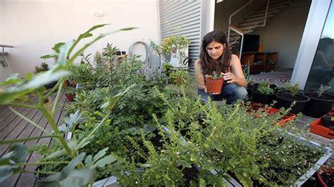 horticultura urbana huerto balcon las espa 241 as una corona varios reinos tomates en el balc 243 n