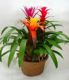 plants that do well in low light indoor plants with flowers for low light newsnish