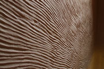 Enduit Sur Mur En by Enduits Terre