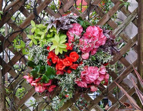 Tanaman Bunga Gantung tanaman hias gantung tahan panas belajar berkebun
