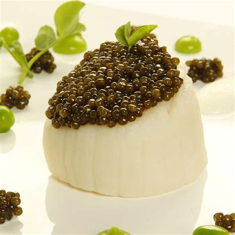 Caviar Shoo sasanian caviar imported caviar and american caviar
