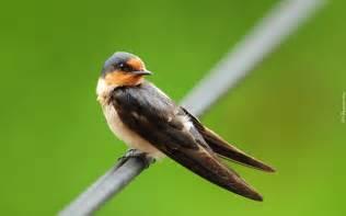 ptaki zwierzaki pl
