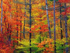 fall colors new america the beautiful in autumn peak fall foliage dates