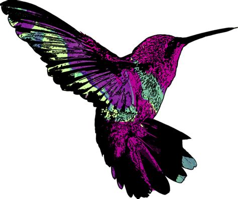 hummingbird illustrations cliparts co
