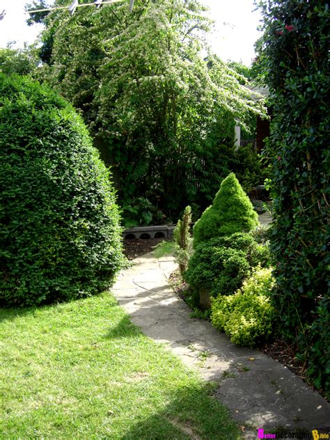 backyard shrubs privacy backyard garden ideas plants photograph bringing privacy t