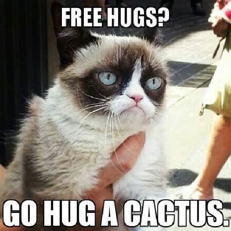 Imgur Com Meme - the grumpy cat album on imgur