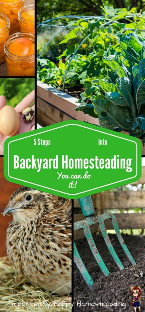 Backyard Homesteading by 1000 Ideas About Modern Backyard On Backyards