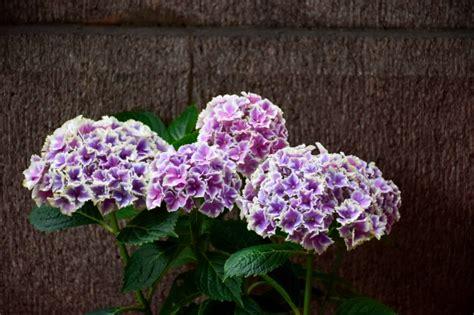 foto con fiori bellissimi bellissimi fiori con sfondo di pietra scaricare foto gratis