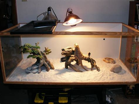 bearded dragon heat l reptile heat ls bulbs the best under 163 10