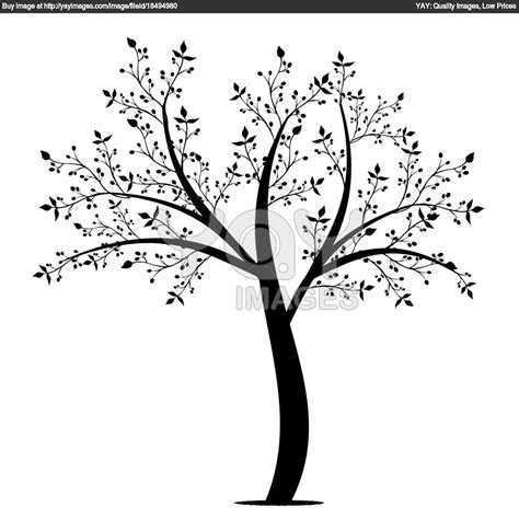 rubber tree coloring page free coloring pages tree limb olive color desenhos