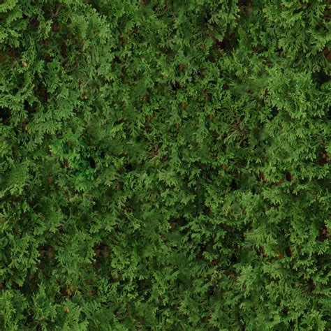 3 tiling shrub textures shrub2 png opengameart org