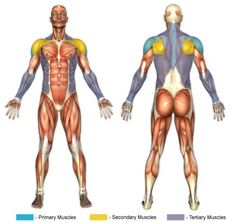 Bench Glute Raises Lying Side Laterals Chunk Fitness