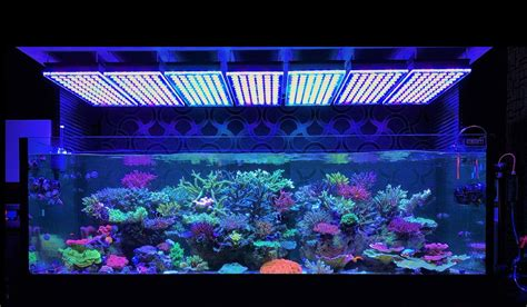 Amazing Japanese Reef Tank Under Atlantik V4 Led Lighting Led Lights For Aquarium