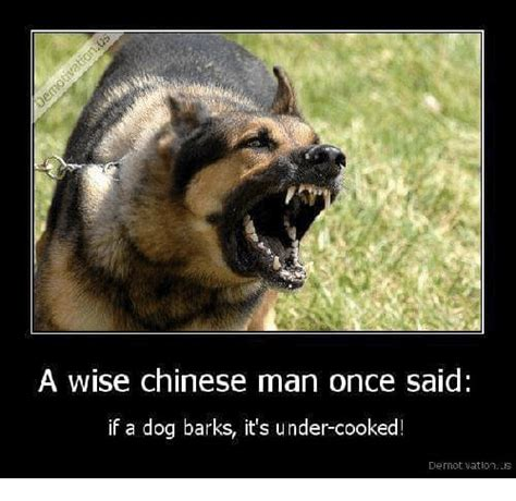 Dog Barking Meme - a wise chinese man once said if a dog barks it s under cooked dernot vationis chinese meme on