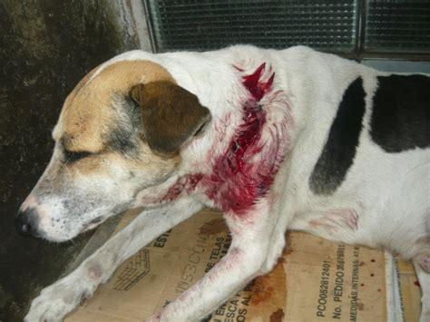 imagenes de animales maltratados haciendo noticia proponiendo debate maltrato animal un