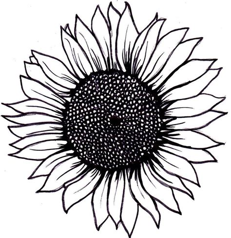 black and white sunflower tattoo simple sunflower drawing wallpapers gallery