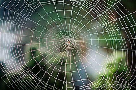 pattern nature web spiral in nature water google search fibonacci spiral