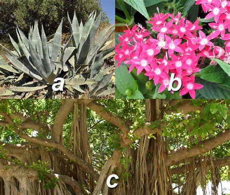 Pot Tanaman Dan Bunga Panjang Sgp 40 jenis tanaman hias tahan panas matahari hujan outdoor segala cuaca
