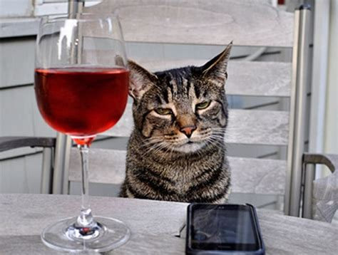 can dogs drink wine top 10 images of cats wine