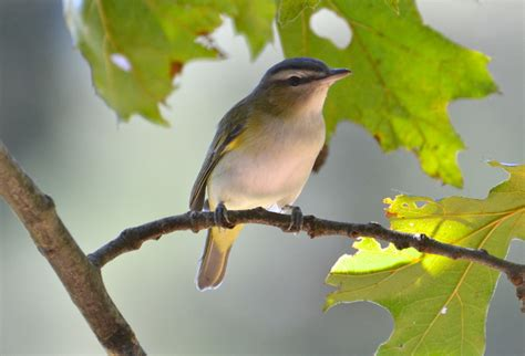 backyard birds matthews nc bird walk at colonel francis beatty park with tony