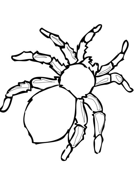 spider outline coloring page free printable spider coloring pages for kids