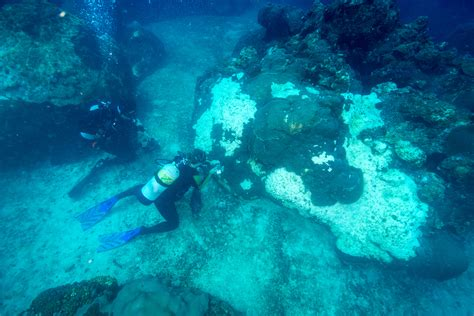 Flower Garden Diving Scientists Investigate Mysterious Coral Mortality Event At East Flower Garden Bank
